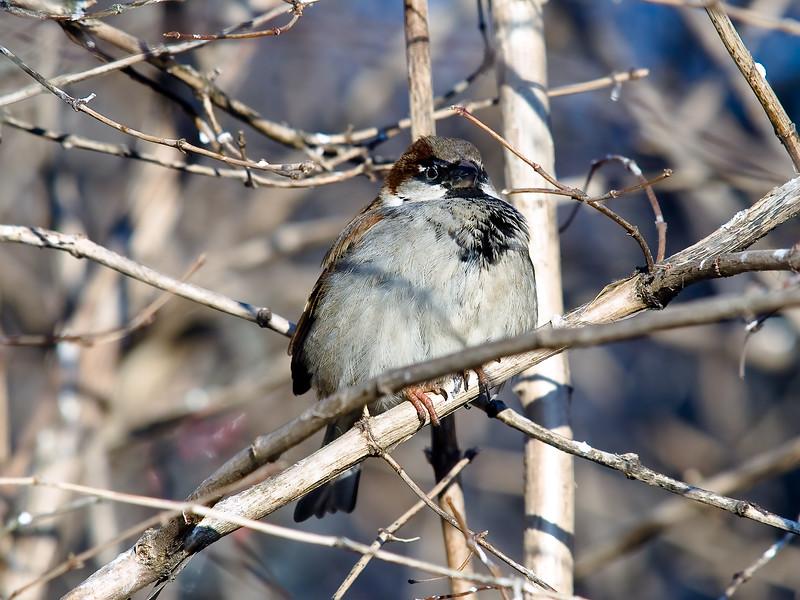 linnut-169.jpg