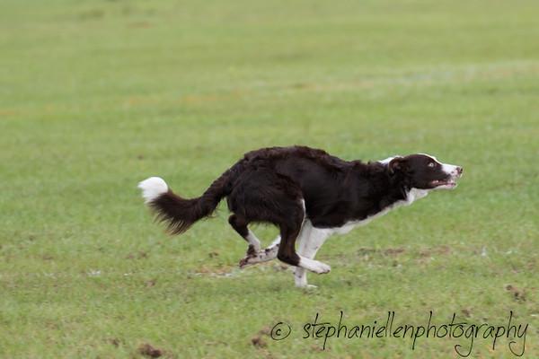 _MG_2292Up_dog_International_2016_StephaniellenPhotography.jpg