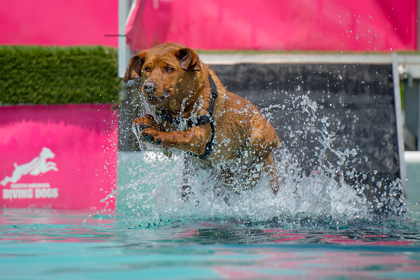 Sniff & Splash 2018 - Saturday