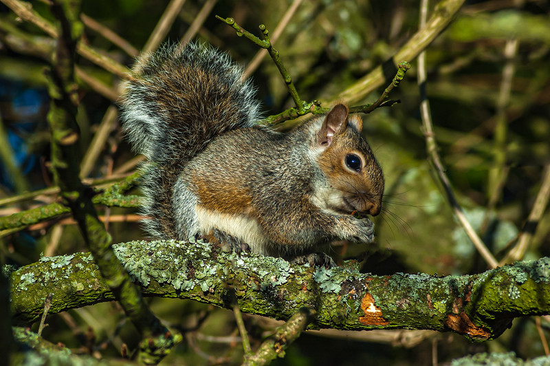 Squirrel sticks out 8894.jpg
