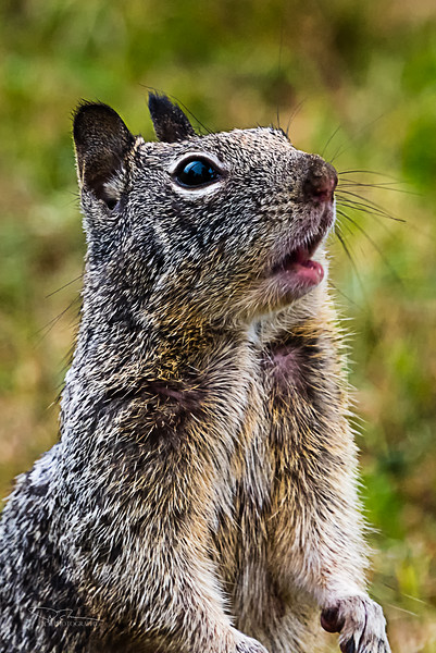 JM8_1596 squirrel LPN.jpg
