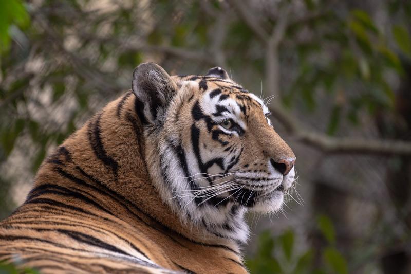 Oakland Zoo-71238-15.jpg