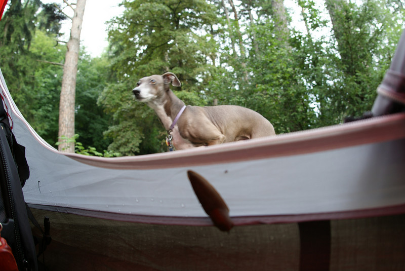 Back at our campsite in Bag Ragaz, Noodle refused to get in the tent with a slug on it.