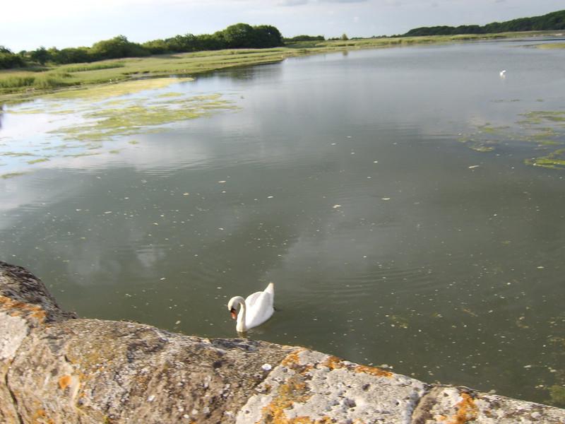 The Causeway Freshwater