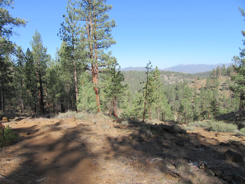 The next morning I headed up the Willow Meadows Cut-Off Trail where, during a steep climb, I could look back across the Little Kern Bridge area (way down and out of sight in the trees), before continuing up to find ...