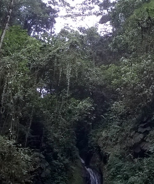 The rainforest is dense.