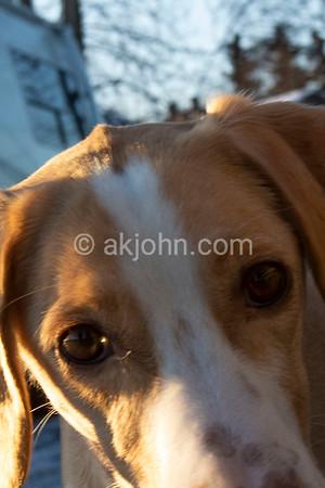 2019 Junior ASDRA Sled Dog Clinic