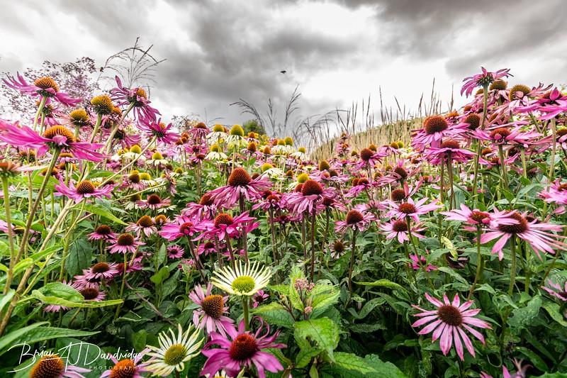 500_Sussex Prairie Gardens-3739.jpg