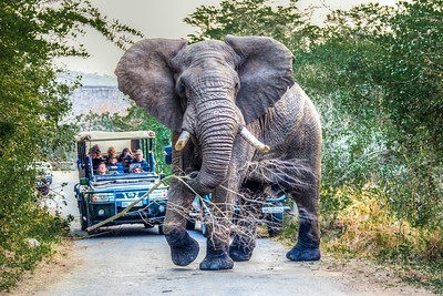 Elephants, South Africa, 2013