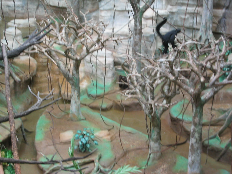 Pictures from my trip to Brookfield Zoo
