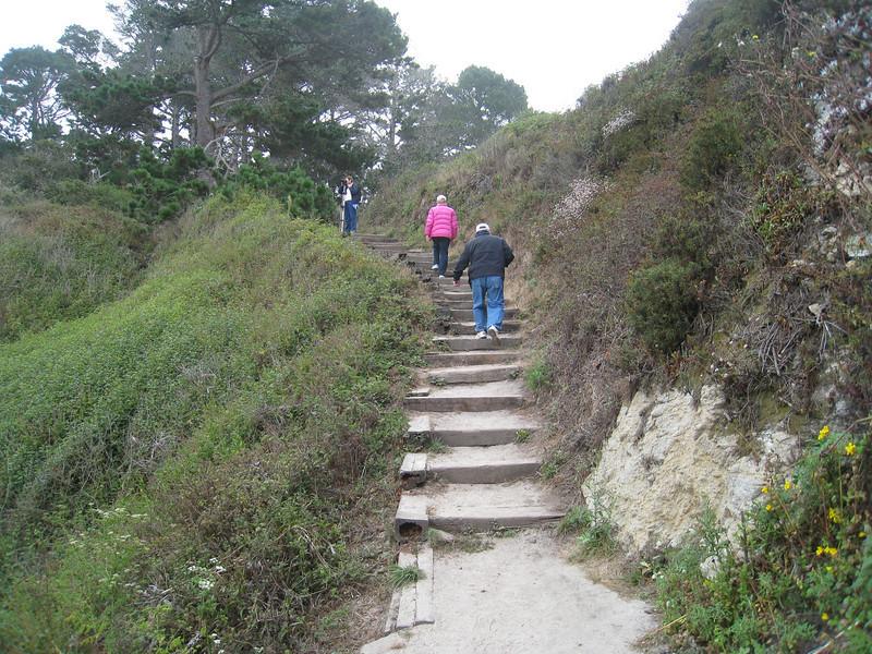 Point Lobos 8:2009 6.jpg