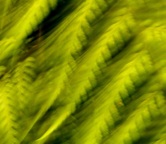 Detail, Reserva Biologica Nuboso Monteverde