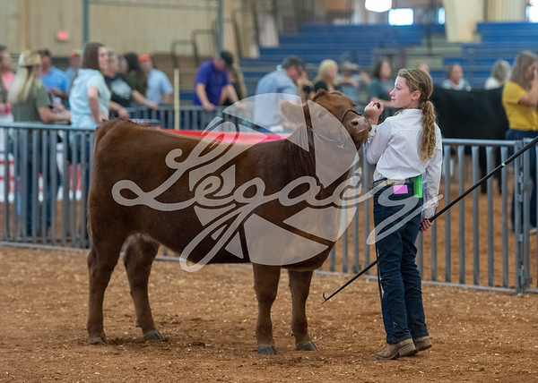 Red Angus Candids