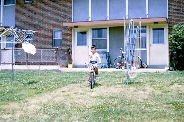 Wilcox 1966