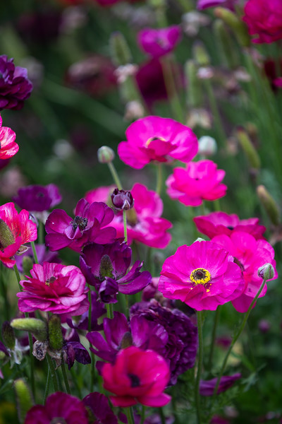 Spring Flowers B-415.jpg