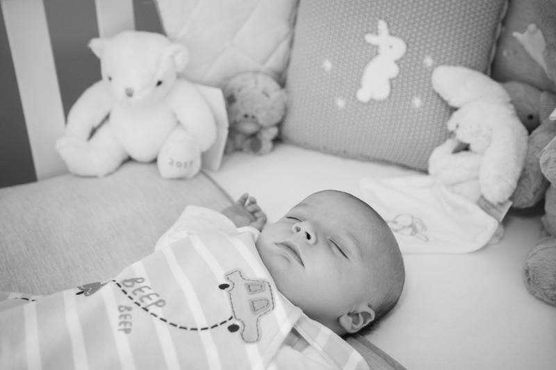 Baby Beacán, 8 weeks old, Ewell, Surrey.
