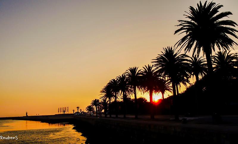 Palms sillohet Porto.jpg