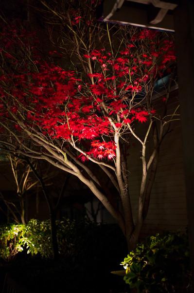2010-11-17-Nightly