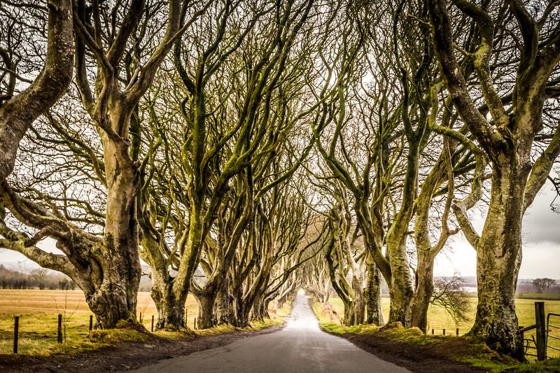 Ireland-0037.jpg