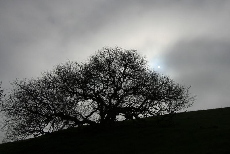 Winter Sun at Garin