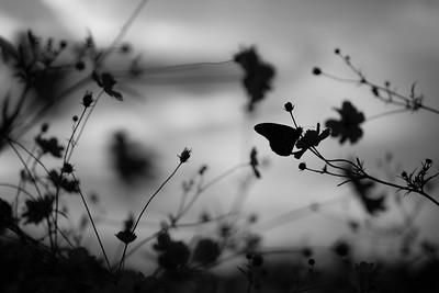 Monochrome Moments