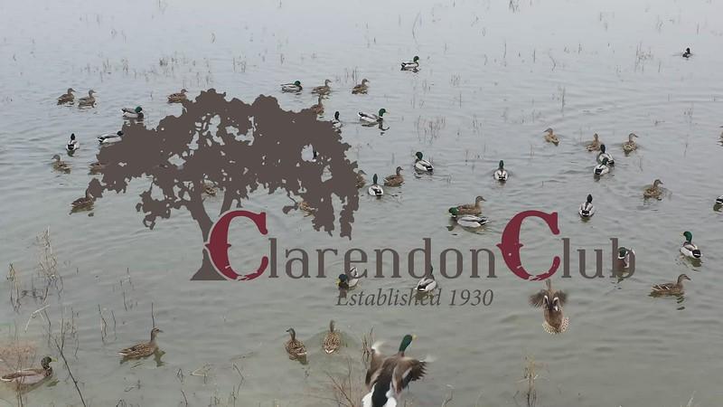 Clarendon Club Waterfowl 2021_mp4.MP4