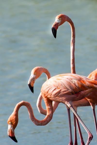 Flamingo threesome3-.jpg