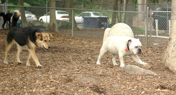 PICS JUNE 20::Maddie, Spot (bulldog)
