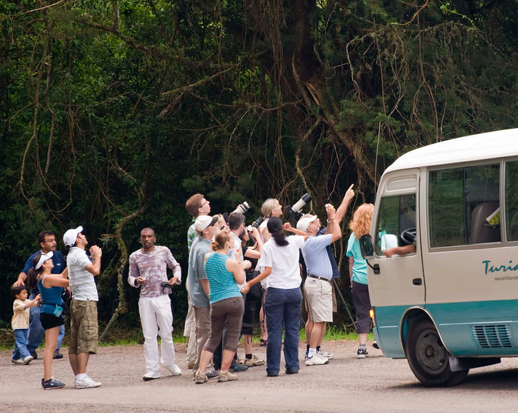 Turistas pointing at the 2-toed sloth
