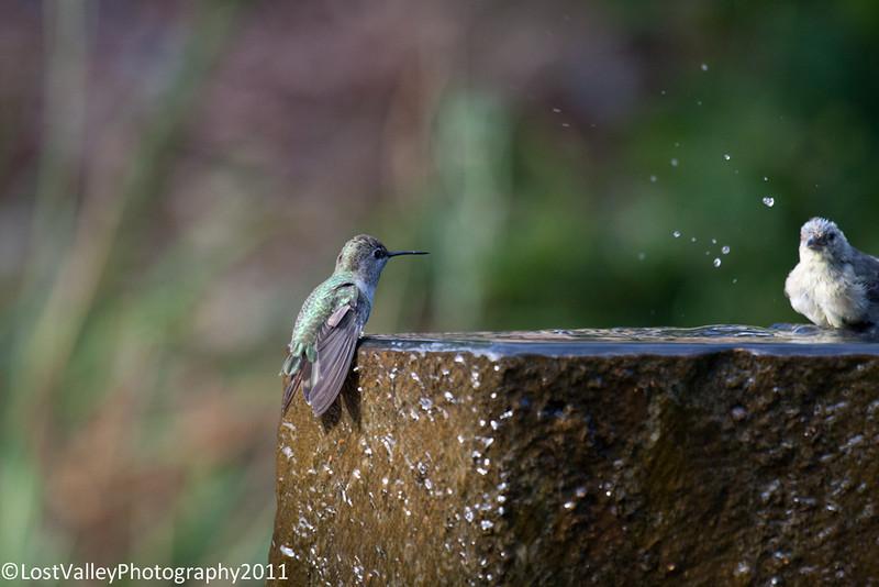 Birds and Fountain-2966.jpg