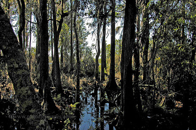 Okefenokee Swamp (2009)