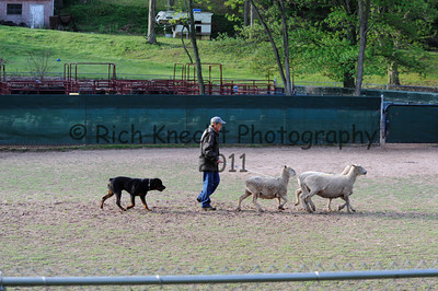 Saturday CRC H/T Sheep