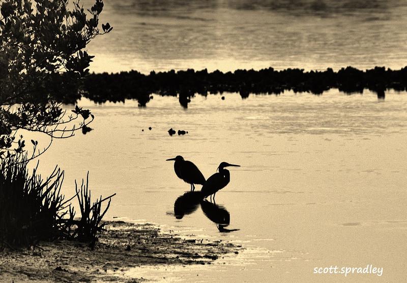 OceanArt Birds 2.jpg