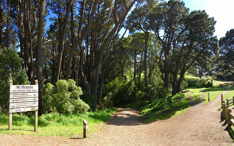 Mt Victoria trail network is amazing