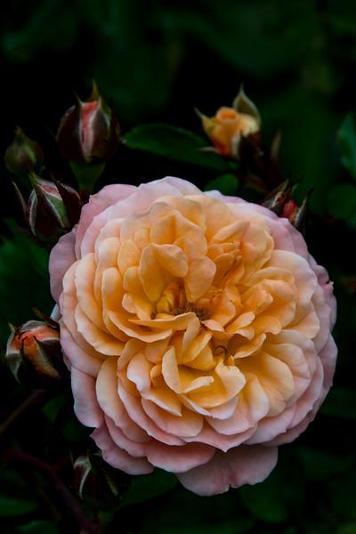 Balboa Park Flowers-1152.jpg