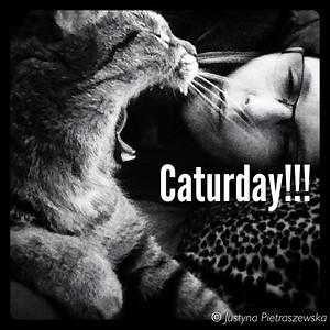 Caturdays