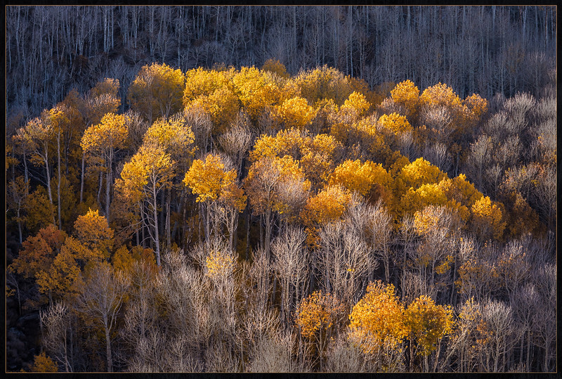 Sierras-Last Golden Moments C3.jpg