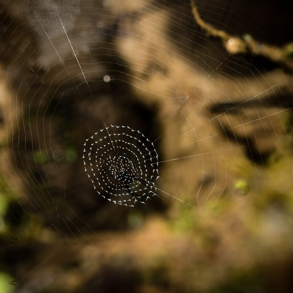 SPIDER - hiding in a webscape-1343.jpg