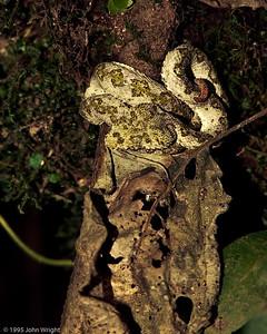 Costa Rica 1995
