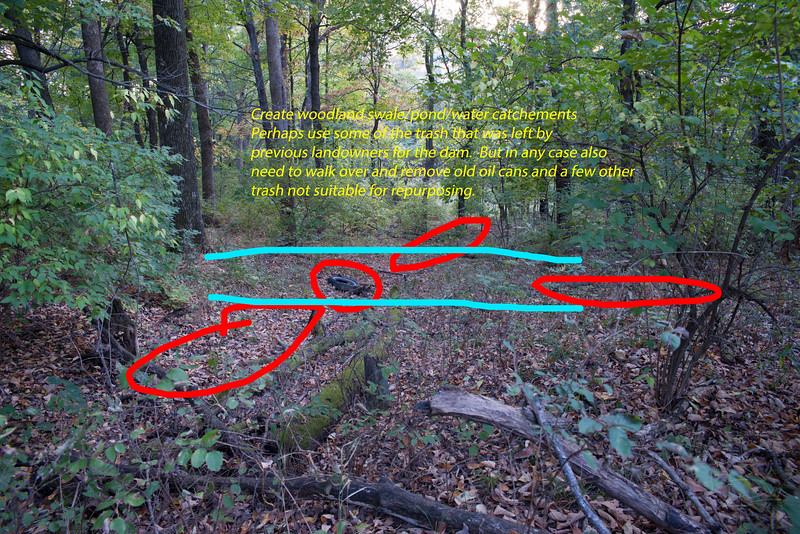 Woodland swales and cleanup