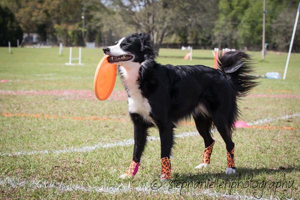 _MG_3164Up_dog_International_2016_StephaniellenPhotography.jpg
