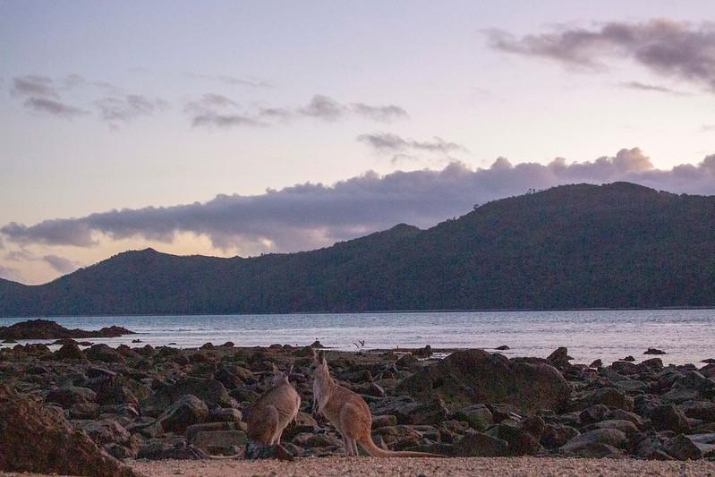 Australia_484.jpg