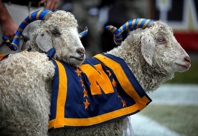 . Navy mascots stand on the sideline as Army marches on the field before the start of the 113th Army-Navy NCAA college football game in Philadelphia Saturday Dec. 8, 2012. (AP Photo/Jacqueline Larma)