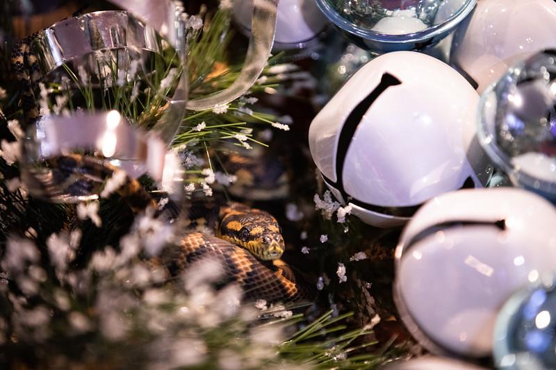 ChristmasSnakes19_0003.jpg