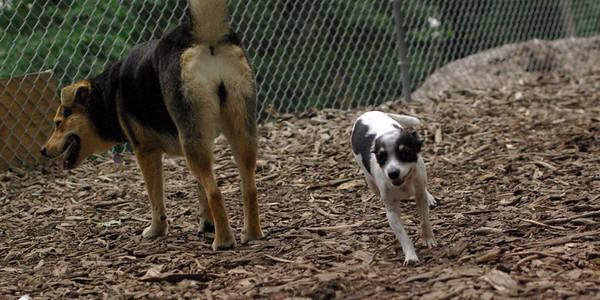 june 28 resize::PACO (chihauhau) & Maddie