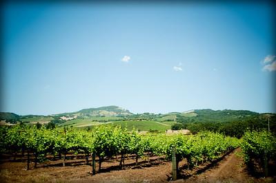 wine trip 2010