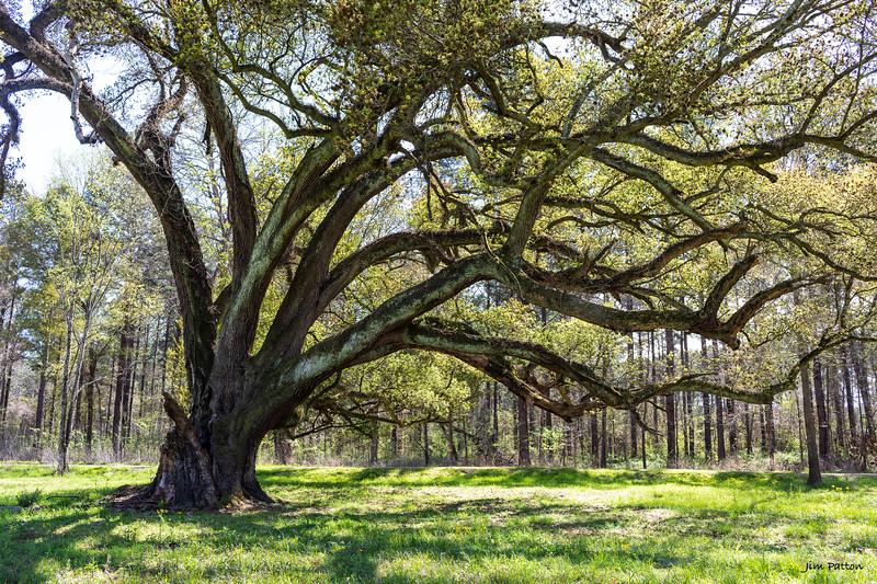 Beautifully bent tree
