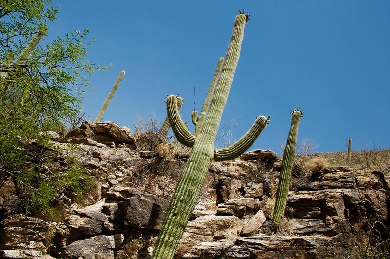 Cactus in Catalina Mountains.jpg