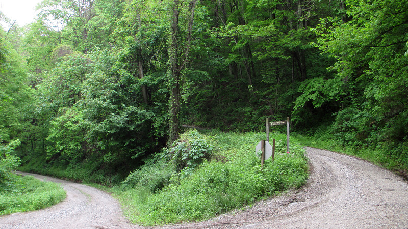 Forest Service Road 81/81F Junction