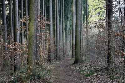 Výlet do Řevnických lesů
